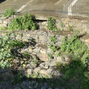 Ciudadanos insta al Ayuntamiento de Teror a llevar a cabo acciones de limpieza y poda en el parque Puente del Pino
