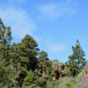 Cs pide al Ayuntamiento de Arico que exija al Cabildo de Tenerife que tome medidas y acondicione las zonas forestales del municipio