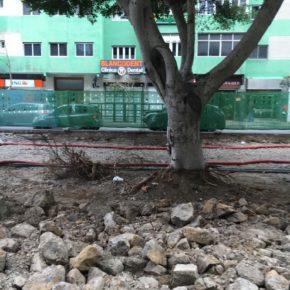 Ciudadanos denuncia la degradación de los árboles de Mesa y López