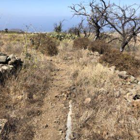 Ciudadanos pide al Ayuntamiento de El Paso que realice mejoras en la zona de los petroglifos de La Fajana