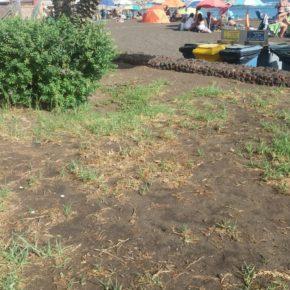 Ciudadanos denuncia el estado de abandono de los jardines de la avenida de la playa de Melenara