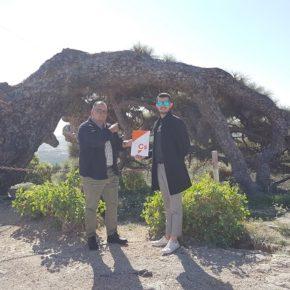 Ciudadanos Arico denuncia el lamentable estado en el que se encuentra el Pino Esrengado