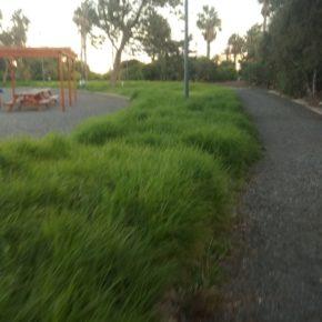 Ciudadanos denuncia el abandono en el que se encuentra el Parque Urbano del Cruce de Arinaga
