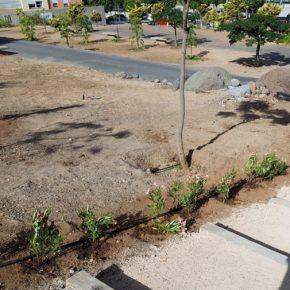 Ciudadanos urge al tripartito a retirar las adelfas plantadas frente al Colegio Martín Chirino por ser altamente tóxicas