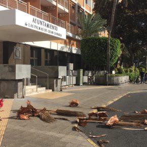 Ciudadanos denuncia el nulo o escaso mantenimiento del arbolado en Las Palmas de Gran Canaria